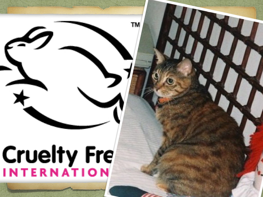 Cruelty Free Beauty: How IStarted